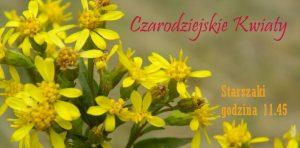kwiaty-starszaki-sstr